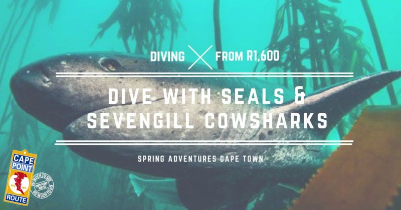 Dive with seals and sevengill cowsharks