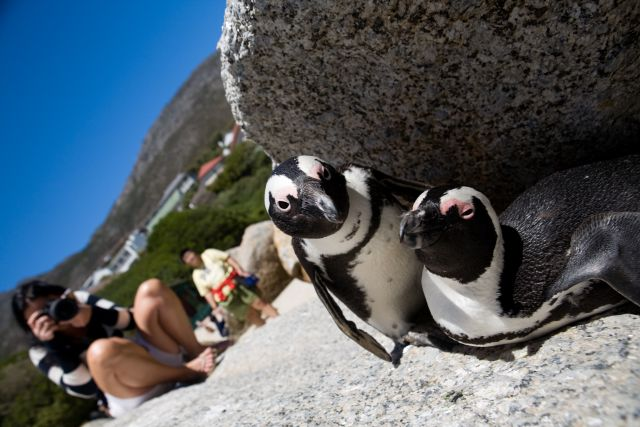 Cape Point Nature Photo Tour Photo: Peter Haarhof