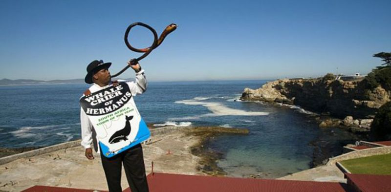 Whale Crier of Hermanus Photo: southafrica.net