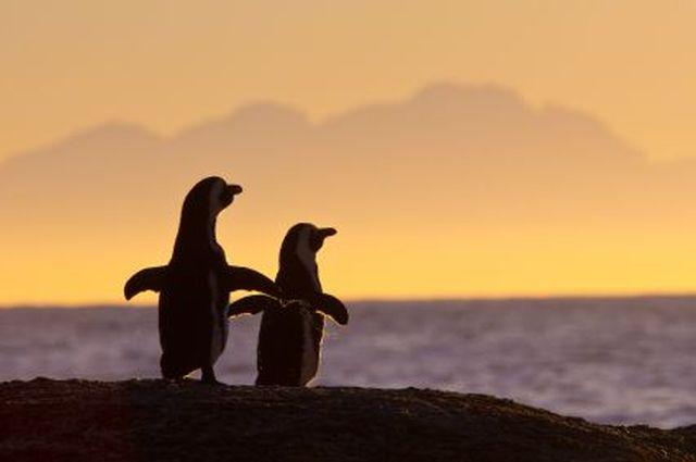 cpr-penguins