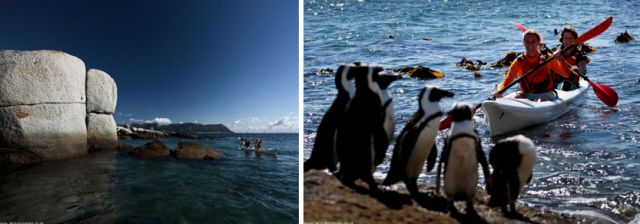 Cape Point Route sea kayaking with the penguins