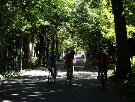 Cape Town Bicycle Tour - arts and bikes