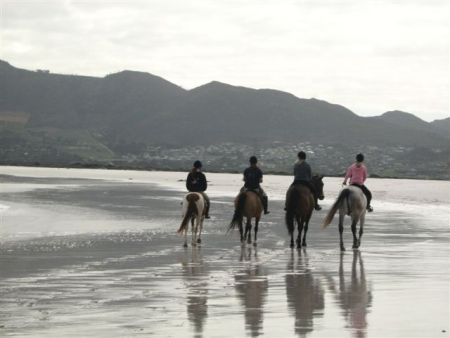Horse Riding in Noordhoek