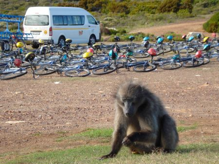cycling tour in cape point