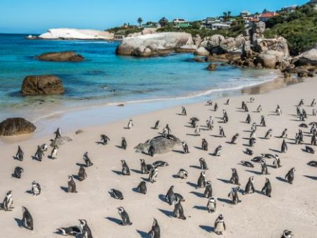 1/2 day Cape Peninsula Tour, Cape Town