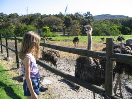 Cape Point Ostrich Farm, Cape Town