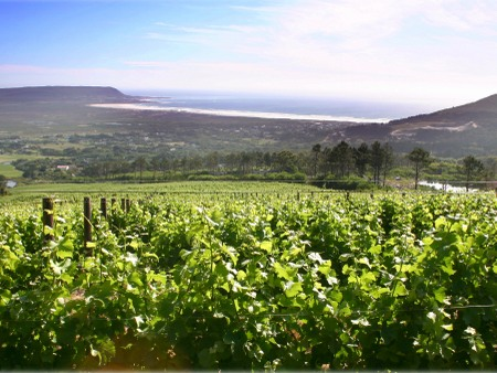 Wine tasting in Cape Town