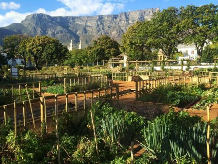 Cape Town Day Tours - food markets