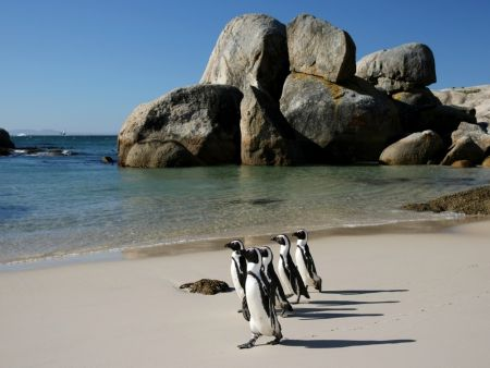 Cape Point Private Tour