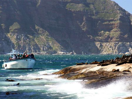 Seal Island boat trip in Cape Town