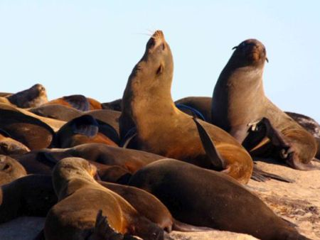 Seal Island in Cape Town