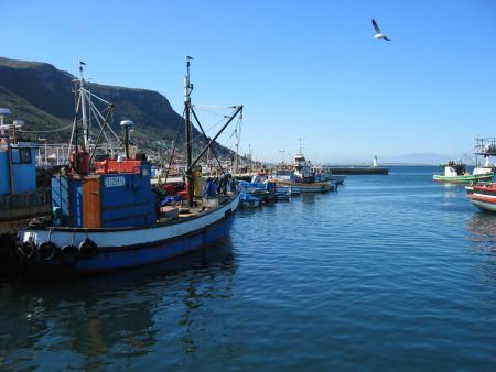 Cape Town, peninsula half day tour