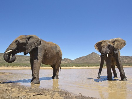 Cape Town Horseback or Quadbike Safari - elephants