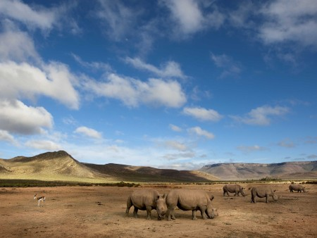 Horseback or Quadbike Safari Cape Town- Rhino