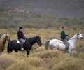 Safari Horseback or Quadbike Day Tour