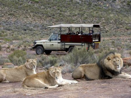 Overnight safari with Big 5- Aquila Standard Chalet