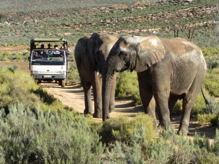 Cape Town Big 5 Game Safari - overnight package