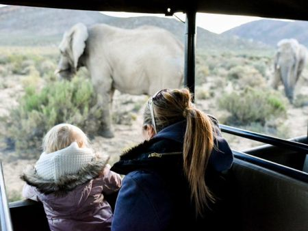 Cape Town Safari Day Tour _ lodge