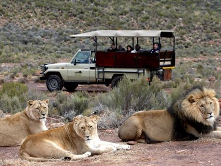 Big 5 overnight safari - Aquila Lions