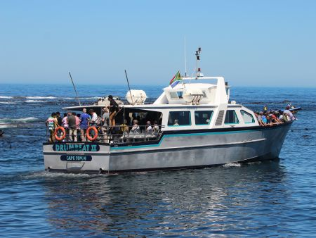 Seal Island and Champan's Peak boat trip in Hout Bay