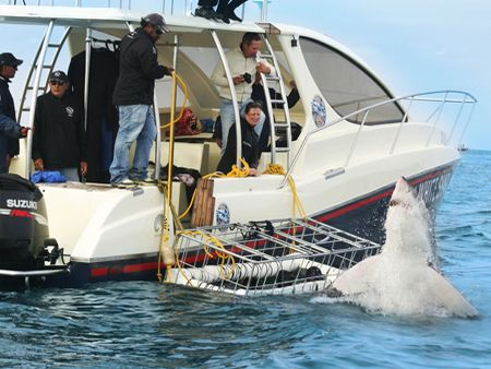 Cage Diving with Great white sharks, Cape Town