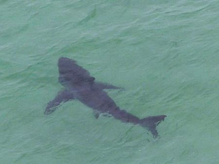 Shark Spotting Scenic Flight