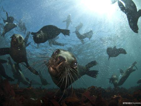 Snorkel with Seals, Cape Town Activity