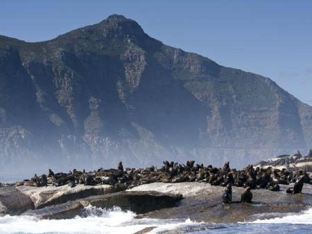Cape Town things to do, snorkelling with seals
