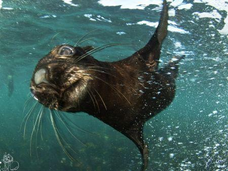 Cape Town Activities, Snorkelling with Seals