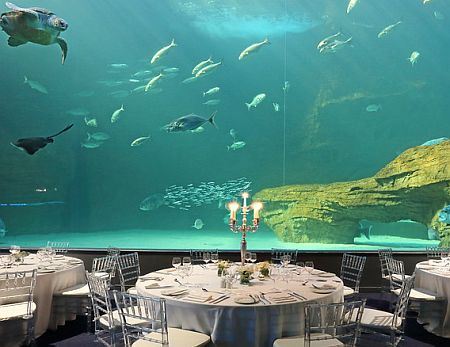 Year End Functions - Under The Sea,  Capetown