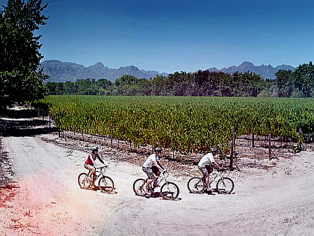 Winelands Bikes 'n Wines Tour