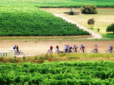 Bikes 'n Wines activity, Cape Town