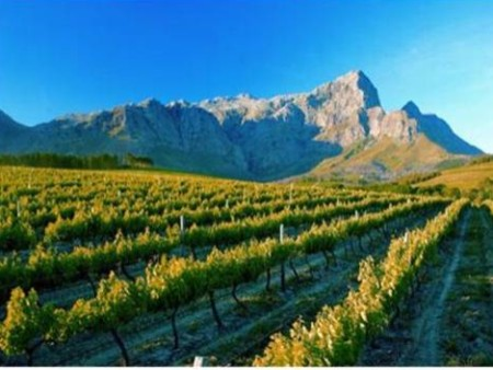 Cape Town Winelnds Tours