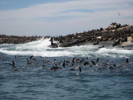 Cape Town activity, seal island boat trip, Simonstown