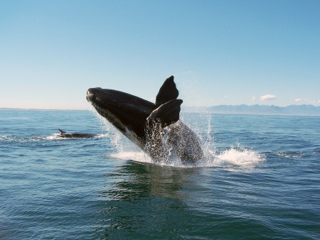 Cape Town Activities, Whale watching boat trip